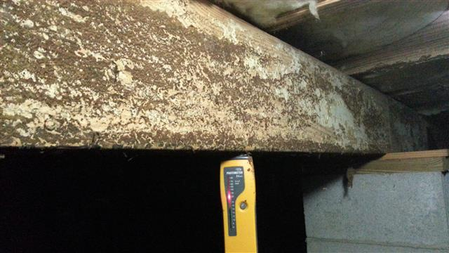 Mold on joist. Alpharetta, GA home inspection.